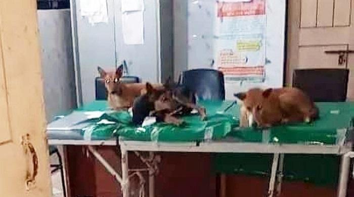 সরকারি-হাসপাতালে-রোগীর-বেডে-কুকুরের-ছবি-ভাইরাল