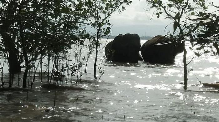 মিয়ানমার-থেকে-নদী-সাঁতরে-বাংলাদেশে-এলো-আরও-দুটি-হাতি