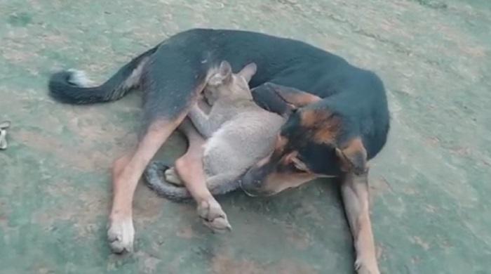 সখীপুরে-কুকুরের-দুধ-খেয়ে-বড়-হচ্ছে-বিড়ালের-বাচ্চা